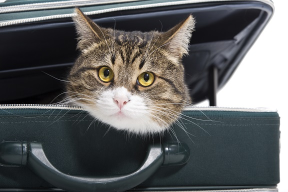 sac et caisse de transport pour chat