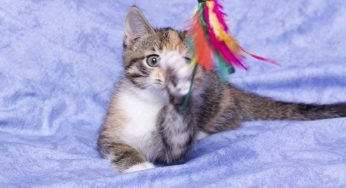 Lire la suite: Accueillir un chaton : quels accessoires ?