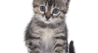 apprivoiser un chaton peureux