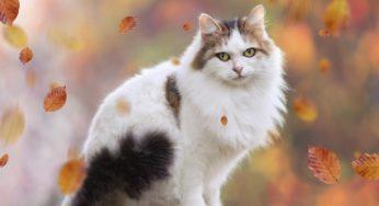 Lire la suite: Troubles du comportement chez le chat agé