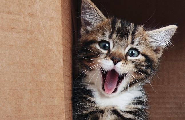 Accueil du chaton : sa première visite chez le vétérinaire