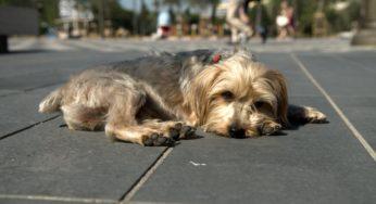 Lire la suite: Est-ce que mon animal souffre ?