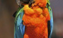 Lire la suite: Mon perroquet crie : que faire ?