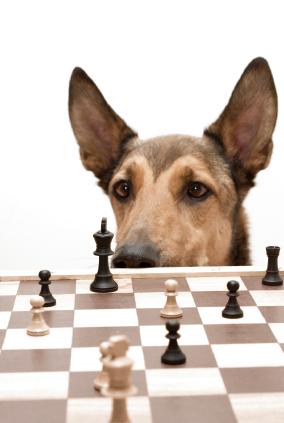 Ce que nos chiens peuvent nous apprendre sur la maladie d'Alzheimer