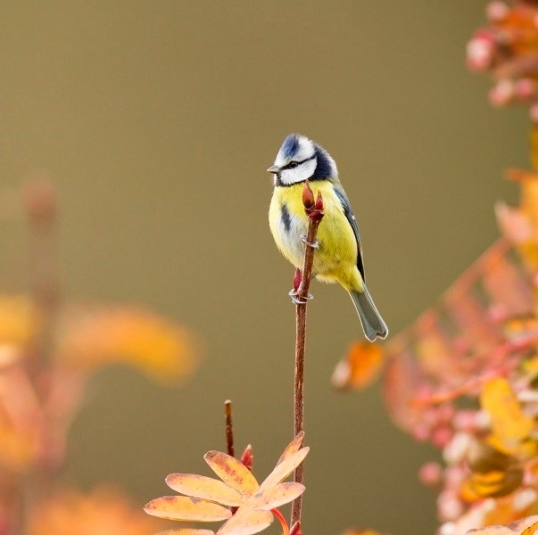 Aider les oiseaux des jardins au fil des saisons - Comment effrayer les oiseaux ...