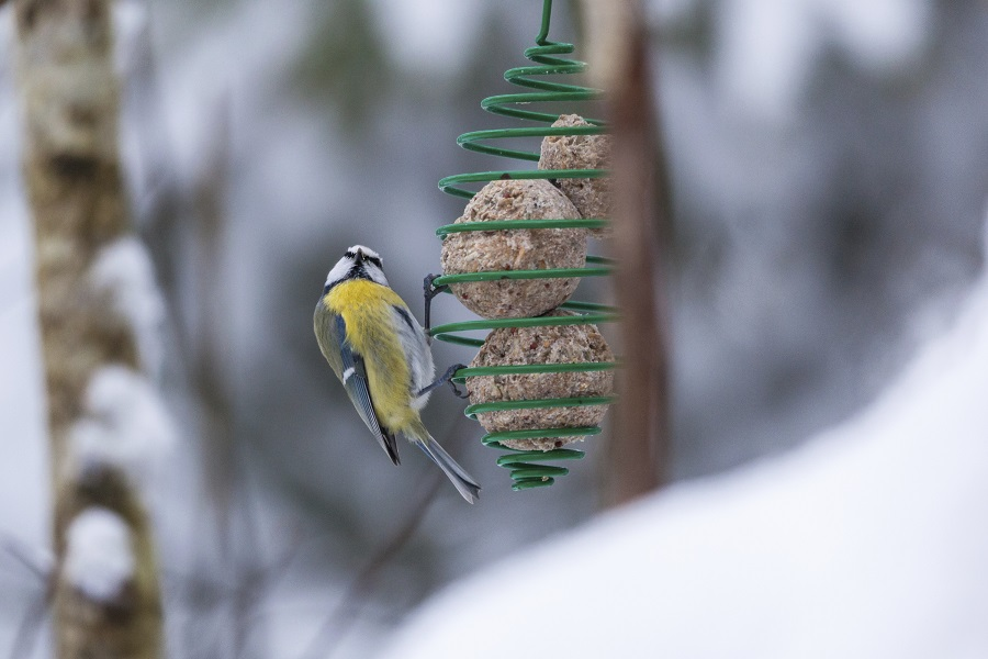 nourrir les oiseaux des jardins