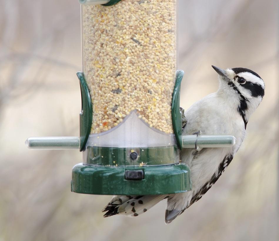 Lire la suite: Aménagez votre jardin pour les oiseaux
