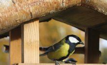 la nidification chez l'oiseau