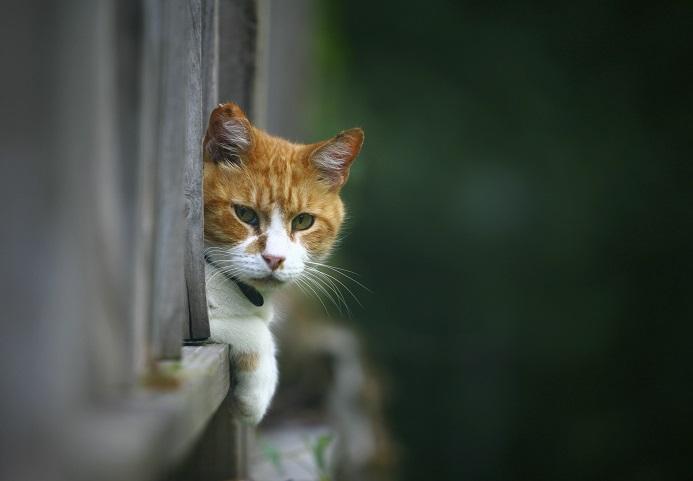 Lire la suite: J'ai perdu mon chat : que faire ?