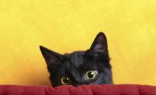 Accueil du chaton : les étapes