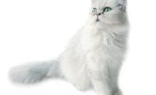 Lire la suite: Larmoiement chez le chat