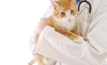 Lire la suite: La conjonctivite chez le chat