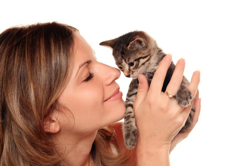 Un chaton sociable et tolérant