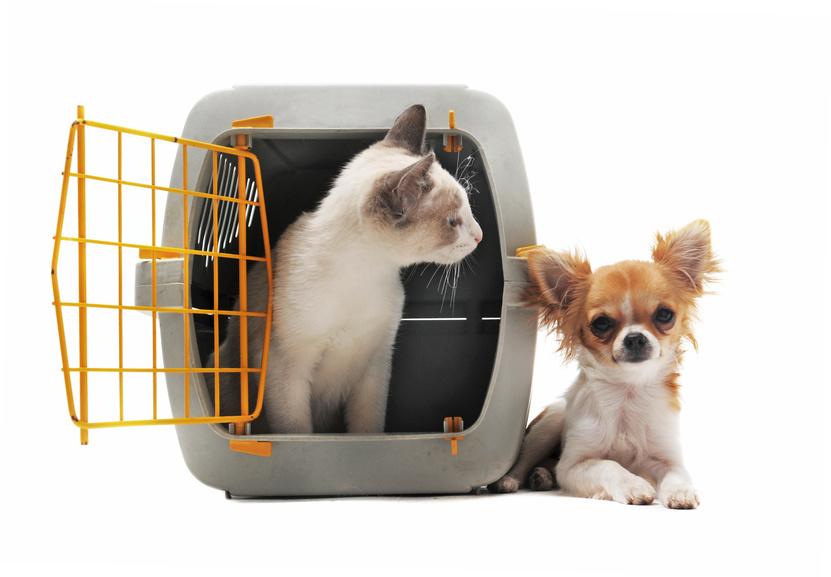 Le métier d'auxiliaire vétérinaire (ASV)