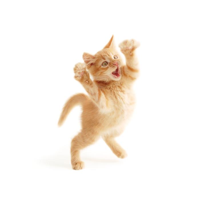 Lire la suite: Pourquoi mon chat... : comportements étranges du chat