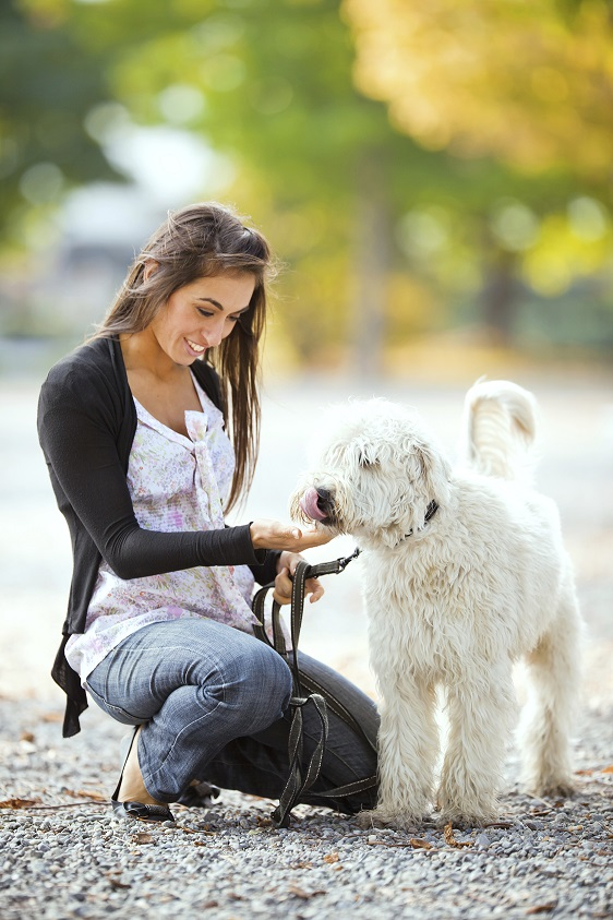 Hiérarchie chez le chien