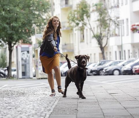 Quelle laisse et quel harnais ou collier pour mon chien ?