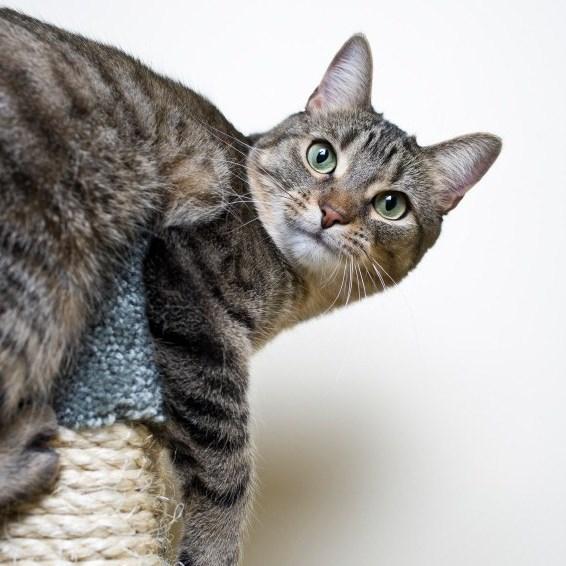 Lire la suite: Comment gérer les conflits entre chats ?