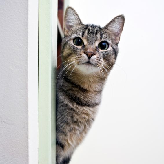 chat intérieur