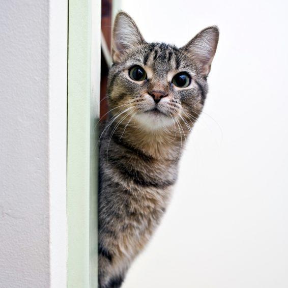 www.wanimo.com/veterinaire/wp-content/uploads/2...