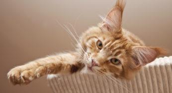 Lire la suite: Mieux vivre avec un chat d'intérieur