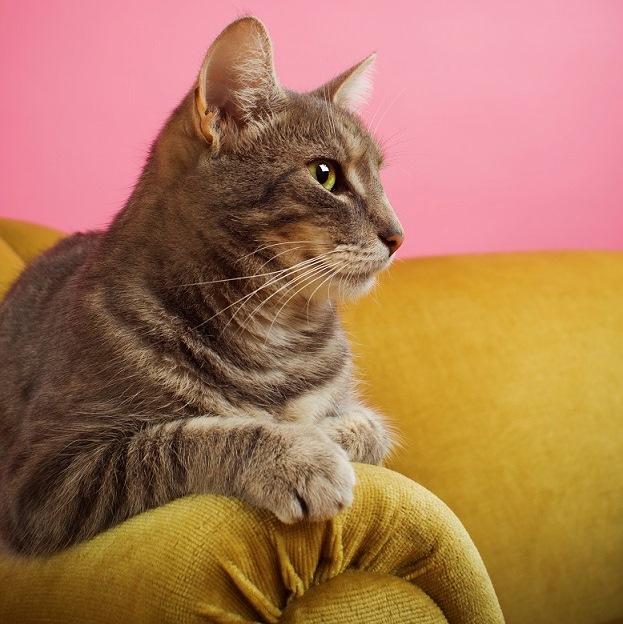 Lire la suite: Que faire en cas de marquage urinaire du chat ?