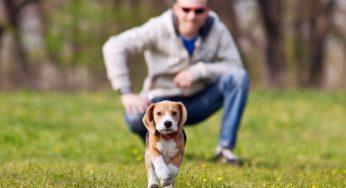 Lire la suite: Apprendre le rappel à mon chien