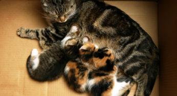 Le lait pour chaton