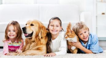 Lire la suite: Comment choisir un antiparasitaire et à quel moment traiter son animal ?