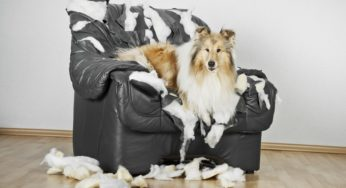 Mon chien détruit tout