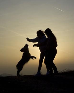 Mon chien saute sur les gens