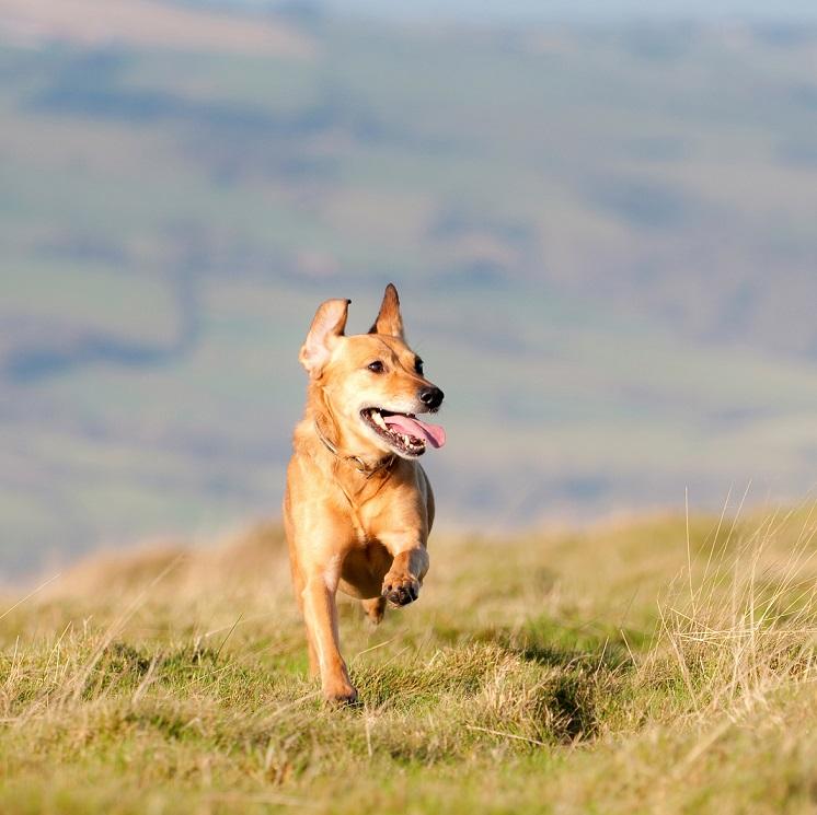 Sorties à la campagne : quels risques pour le chien