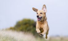 Lire la suite: Les maladies transmises par les tiques et les puces chez le chien