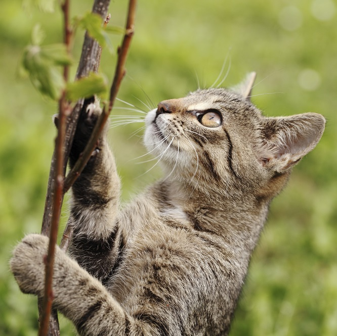 Lire la suite: Phytothérapie, huiles essentielles et fleurs de Bach pour les animaux