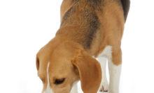 Lire la suite: Mon chien mange trop vite