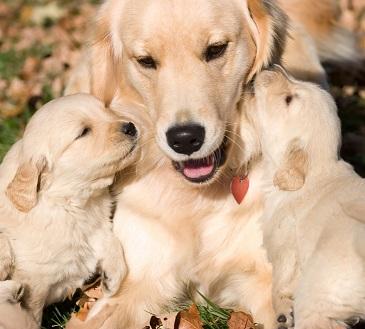 Lire la suite: Le métier d'éleveur de chiens ou de chats