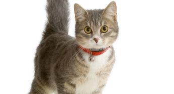 Pourquoi ne pas donner la pilule à votre chatte?