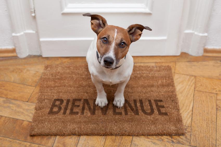 Arrivée du chien et présentation