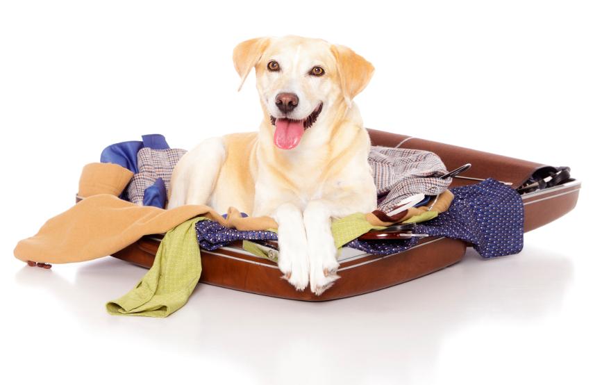 Lire la suite: Que fait mon chien en mon absence ?