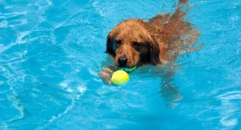 Lire la suite: L'hydrothérapie pour le chien