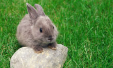 Vie en extérieur pour les rongeurs et lapins