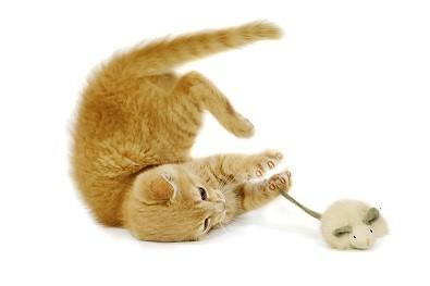 Quel jouet pour mon chat ?