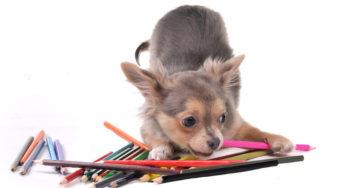 Lire la suite: Mon chien a mangé un objet non comestible : est-ce grave ?