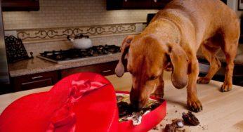 intoxications des animaux à la maison