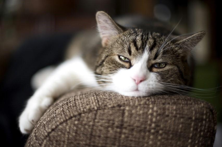 Comment savoir si mon chat est malade ?