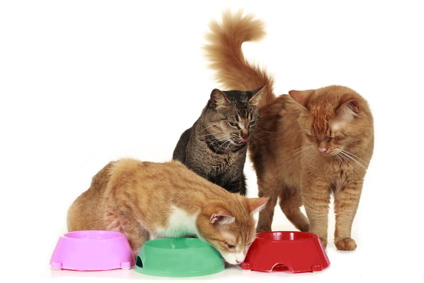 Lire la suite: Quelle gamelle pour mon chat ?