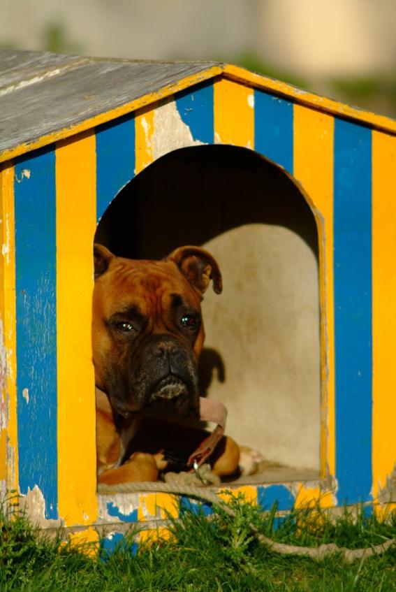 Lire la suite: Fiche métier : la pension animalière
