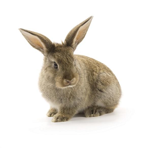 Lire la suite: Bien choisir son lapin