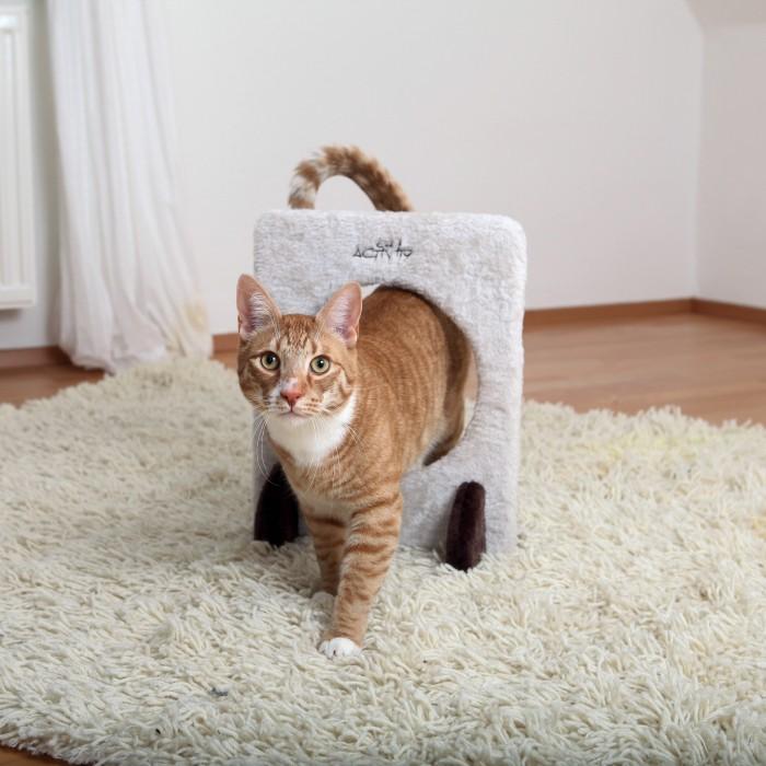 L'agility avec son chat