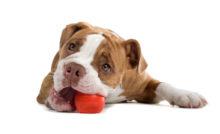 Lire la suite: Quel jouet pour mon chien ?